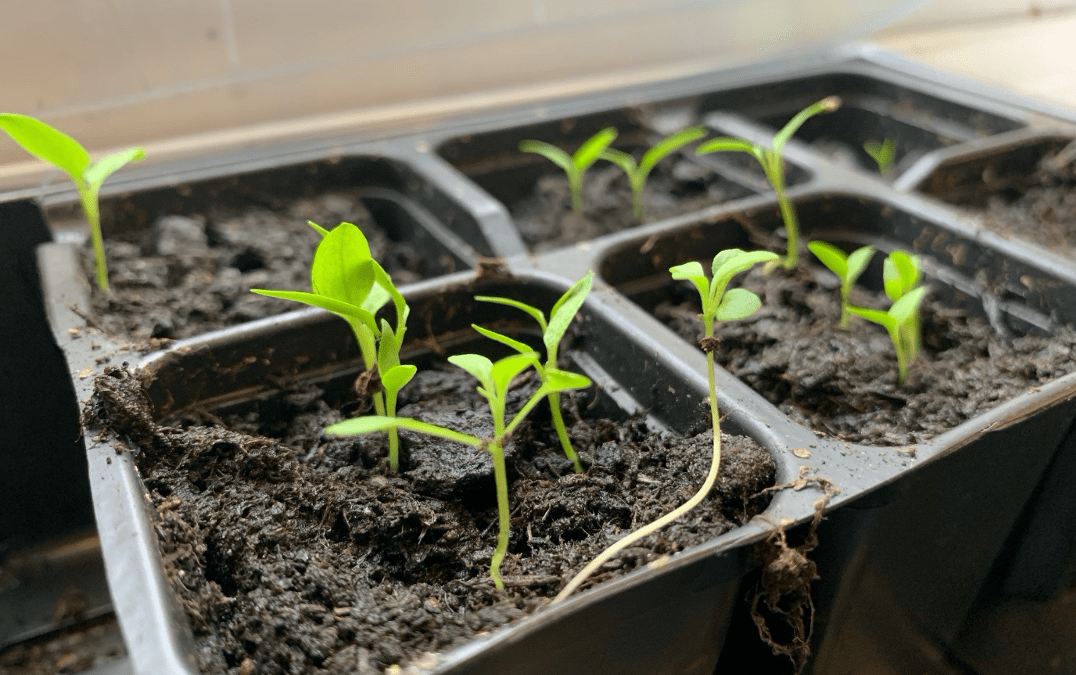 Macmillan Cancer Connections: Planting Seeds